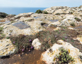 Limestone surface with rock-pools in Malta - 179853793