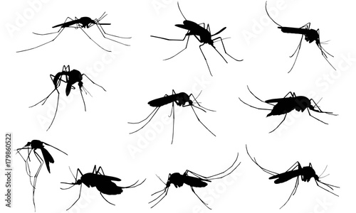Mosquito Silhouette Vector Graphics  - 179860522