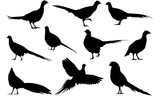 Pheasant Silhouette Vector Graphics  - 179860913