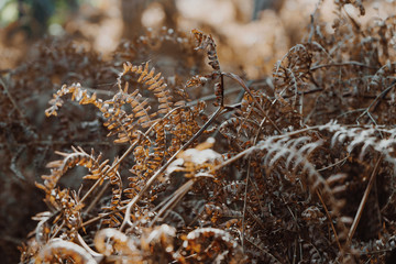 Dry fern leave in the forest, autumn background.