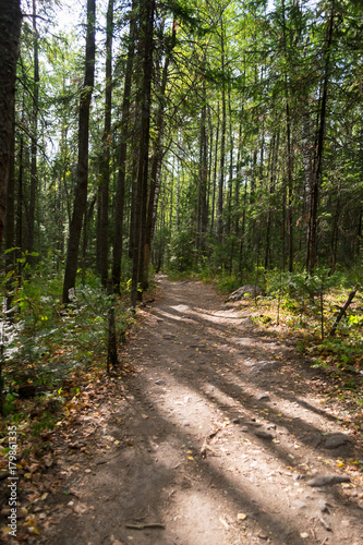 Foto op Plexiglas Weg in bos Silent path in the forest. Image taken on an summer day in the national park Taganay.