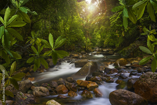 Fotobehang Bamboe Asian jungle