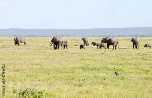 Amboseli Nationalpark Kenya Poster