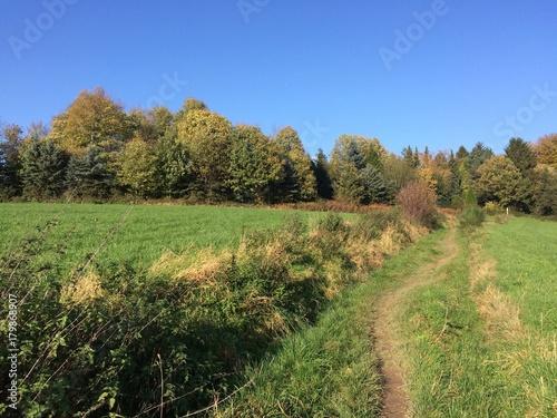 Foto op Canvas Pistache Naturlandschaft mit Feldweg im Herbst