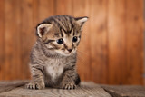 small tabby kitten on background of old wooden boards