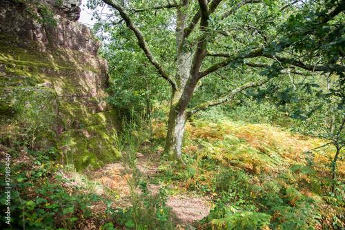 Aluminium Weg in bos L'arbre de la forêt