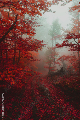 Papiers peints Marron Path in the autumn golden forest