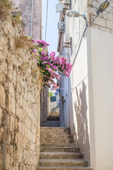 narrow alley with flowers
