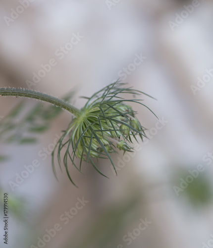 Green and white flower - 179914530