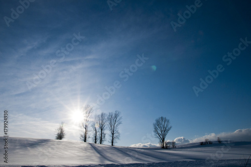 Papiers peints Bleu nuit 冬の太陽と青空と冬木立