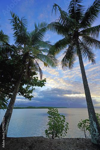 Fotobehang Tropical strand Sunset over palm trees in Port Douglas, Australia