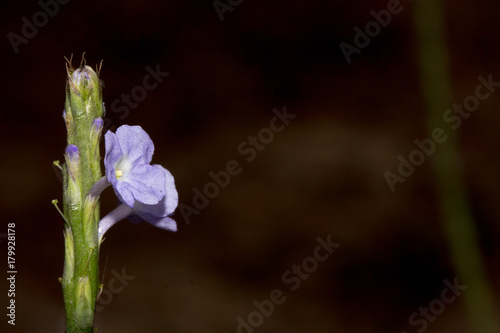 Fotobehang Iris Close up purple flowers in the forest