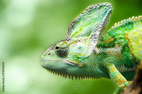 Aluminium Kameleon reptile