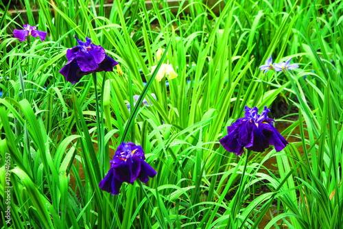 Fotobehang Groene 花咲く公園の風景4