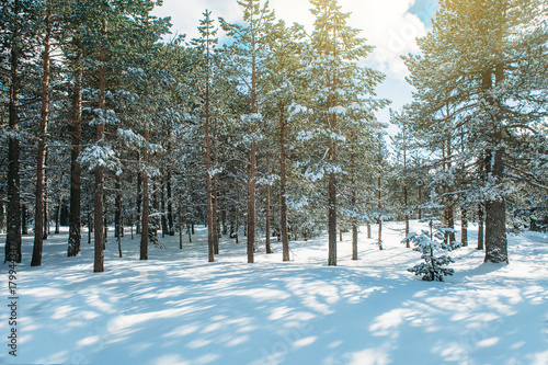 Plexiglas Khaki Snowy forest in sunlight