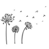 Abstract Dandelion Background with black flowers on white .