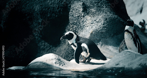 Foto op Canvas Antarctica Portrait of two penguins standing on rocky shore