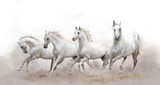 beautiful white arabian horses running over a white background - 179961711