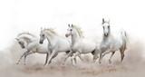 piękne białe konie arabskie działa na białym tle