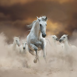 Beautiful white andalusian stallion with herd on freedom - 179963570