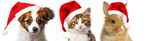 cute puppy and cat and rabbit  with red santa cap - 179975706