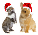 little baby rabbits with a red santa cap - 179975963