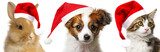 cute papillon puppy and cat and rabbit with red santa caps - 179976147