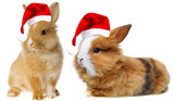 little rabbit with read santa cap isolated on white - 179976311