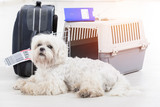 little dog and the airline cargo pet carrier - 179984997