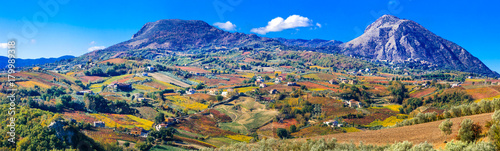 Fotobehang Freesurf Colorful carpet of vineyards in autumn colors. Benevento, Italy