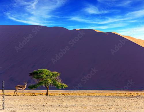 Keuken foto achterwand Aubergine African antelope Impala in Namibia