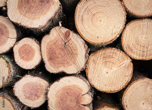 Papiers peints Texture de bois de chauffage Gestapelte frisch geschnittene Baumstämme