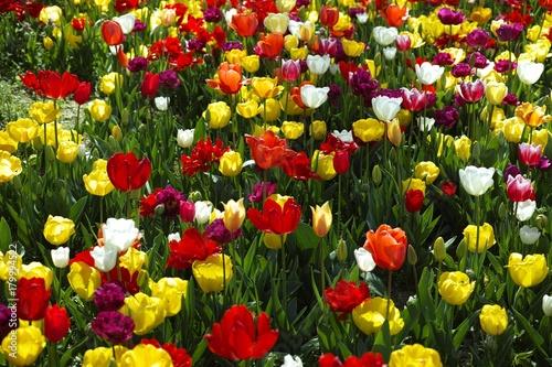 Fotobehang Tulpen the sea of tulips