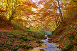 River flowing through colorful forest