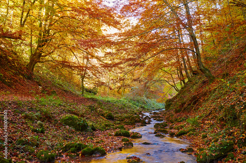 River flowing through colorful forest - 180001140