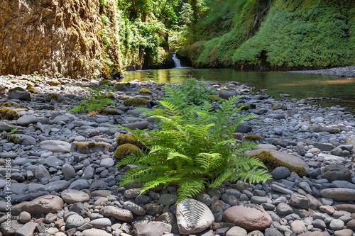 Fotobehang Betoverde Bos Ferns along Banks of Eagle Creek in Oregon USA America
