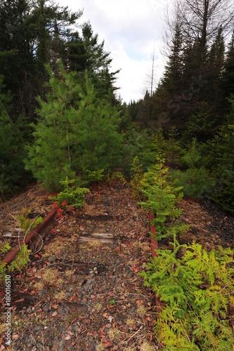 Fotobehang Diepbruine wilderness railroad tracks