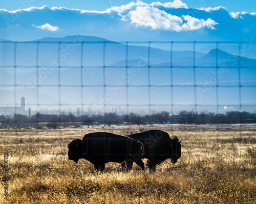 Aluminium Bison Silhouettes of Two Bison, through Fence, with Mountains in Distance
