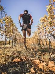 Man running in the vineyards in autumn