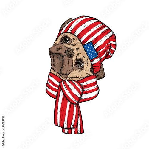 In de dag Art Studio A beautiful dog in a scarf and hat. Vector illustration. Winter clothes and accessories. Purebred puppy. Pug.