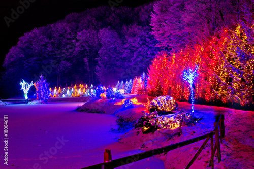 Foto op Canvas Violet Christmas trees row and frozen lake view