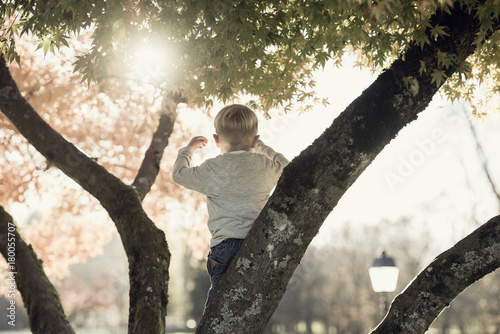 Little boy standing on a branch in an autumn tree