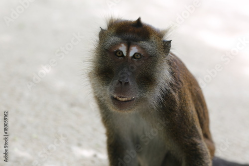 Exotic monkey in Boracay Poster