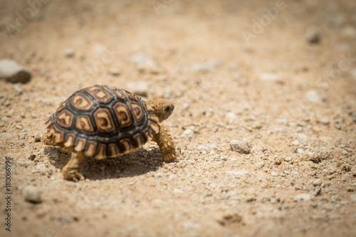 Fotobehang Schildpad tortoise_2