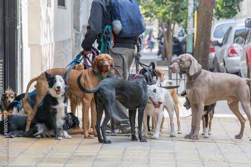 Poster Buenos Aires Dog Walker