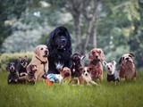 Many different breeds of dogs on the grass - 180076747