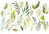 Watercolor set. Wild forest. Leaves. Illustration - 180078397