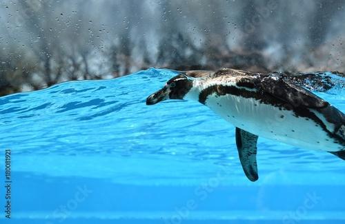 Fotobehang Pinguin ペンギン