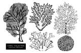 Vector collection of hand drawn reef corals sketch.Vintage set underwater natural elements. Vintage sealife illustration on white background - 180082777