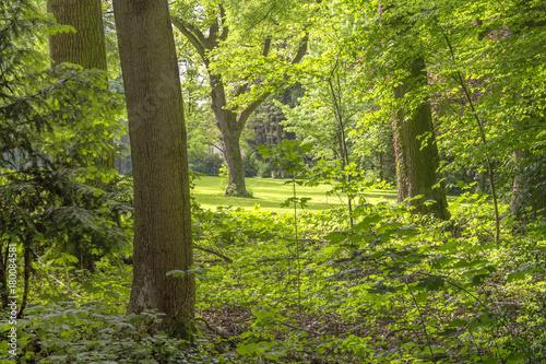 Poster Water planten idyllic forest scenery